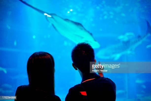 People viewing sea life at a aquarium in Osaka.