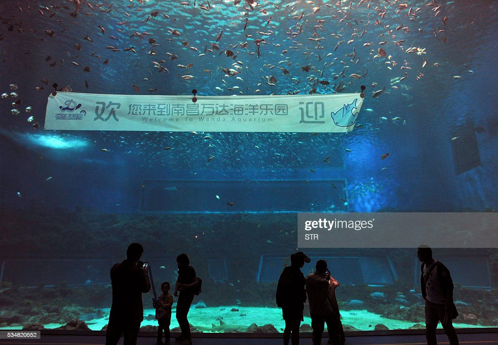 People visit an aquarium at the newly open theme park 'Wanda City' in Nanchang, east China's Jiangxi province on May 28, 2016. The Chinese conglomerate Wanda on May 28 opened its first theme park, with its billionaire boss declaring war on Disney weeks before the American entertainment giant launches a similar attraction in Shanghai. / AFP / STR / China OUT