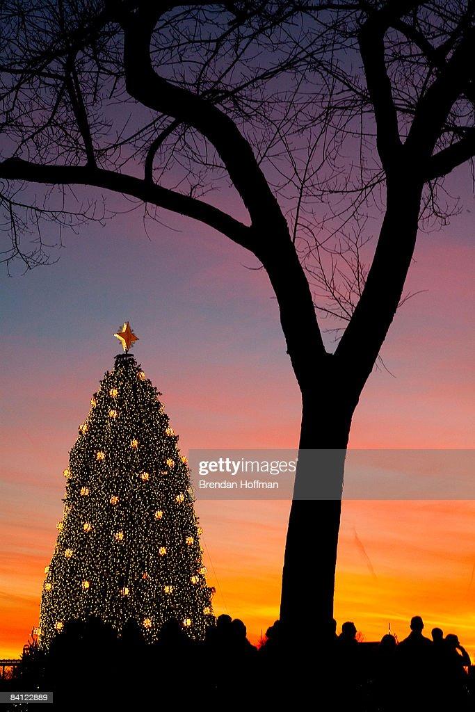 Washington DC Celebrates The Spirit Of Christmas Photos And Images  - Visiting The National Christmas Tree