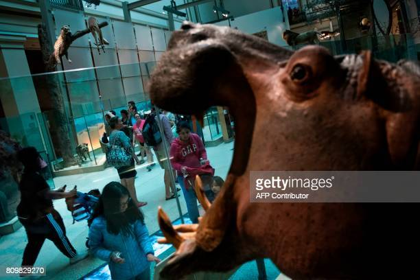 People visit the Smithsonian's Natural History Museum on July 6 2017 in Washington DC / AFP PHOTO / Brendan Smialowski