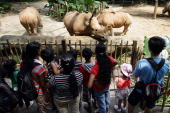 People visit the white rhinoceros enclosure at the Singapore Zoo on June 27 2013 in Singapore Home to more than 2800 animal specimens from over 300...