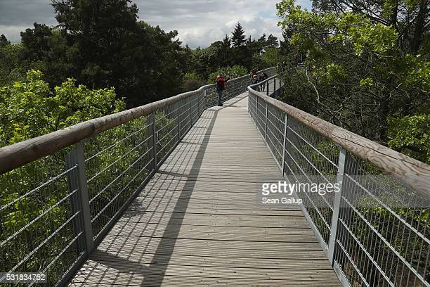 People walk along the 'Baum und Zeit' elevated platform near the ruins of the Beelitzer Heilstaetten sanatorium on May 16 2016 in Beelitz Germany The...