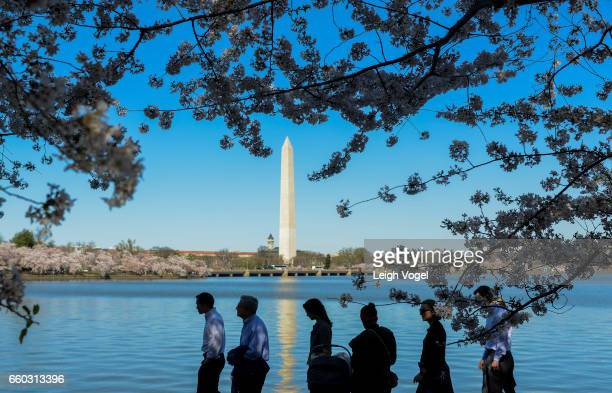 People walk along the tidal basin while cherry blossoms are in bloom on March 29 2017 in Washington DC