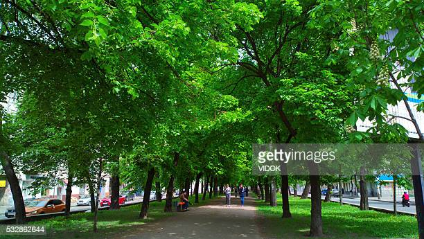 People walk and relax on the tree-lined street.