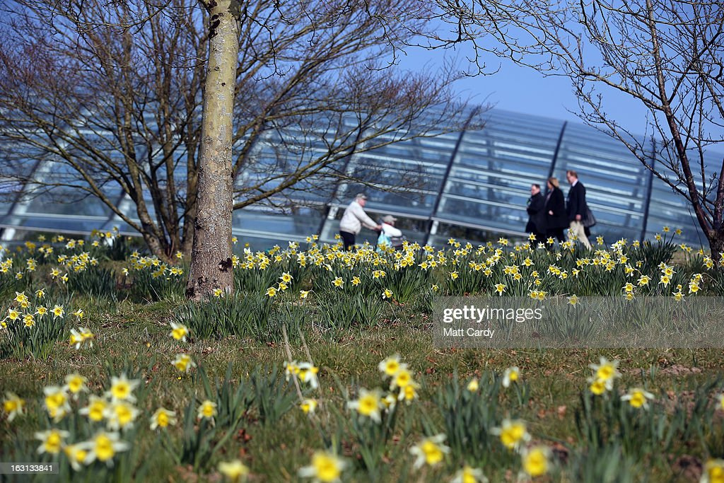 People walk besides daffodils growing in front of the Norman Foster designed Great Glasshouse at the National Botanic Garden of Wales on March 5, 2013 near Carmarthen, Wales. As the weather improves, staff at the gardens - which opened in 2000, stretches over 500 acres and contains the largest single span glasshouse in the world - are gearing up for the arrival of the spring season.