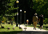 People walk by Canada geese near Ferril Lake in City Park on July 21 2016 in Denver Colorado The park attracts lots of geese which are beginning to...