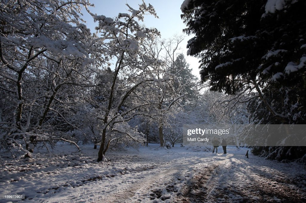 People walk on snow surrounding trees at Westonbirt Aboretum on January 24, 2013 near Tetbury, England. According to forecasters the UK is set to experience a thaw from the winter weather with rain, higher temperatures and high winds arriving from the South West tomorrow.