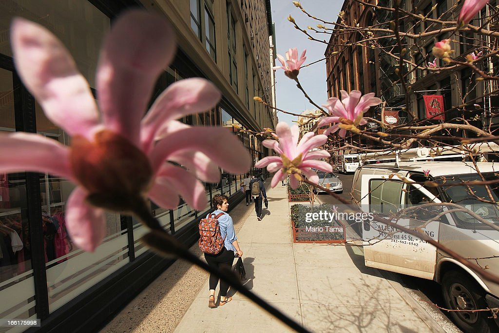 People walk past a flowering tree in Manhattan during warm weather on April 9, 2013 in New York City. For the first time since October, temperatures rose above 70 degrees in New York and surrounding areas.