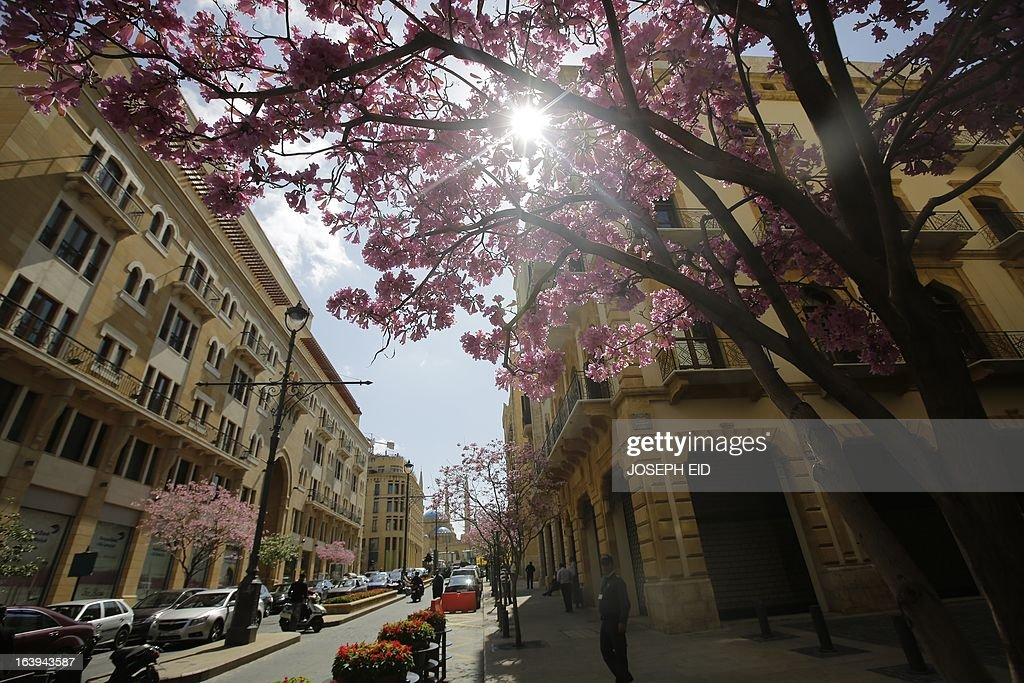 People walk past blooming trees at a street in the centre of the Lebanese capital Beirut on March 18, 2013.