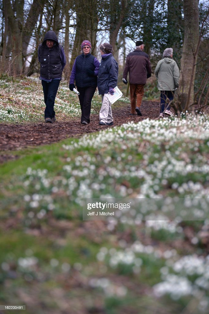 People walk past snowdrops coming into bloom in the grounds of Cambo House on February 20, 2013 in St Andrews, Scotland. The estate is open daily for visitors to enjoy the woodland walks and to view over 300 varieties of snowdrops.