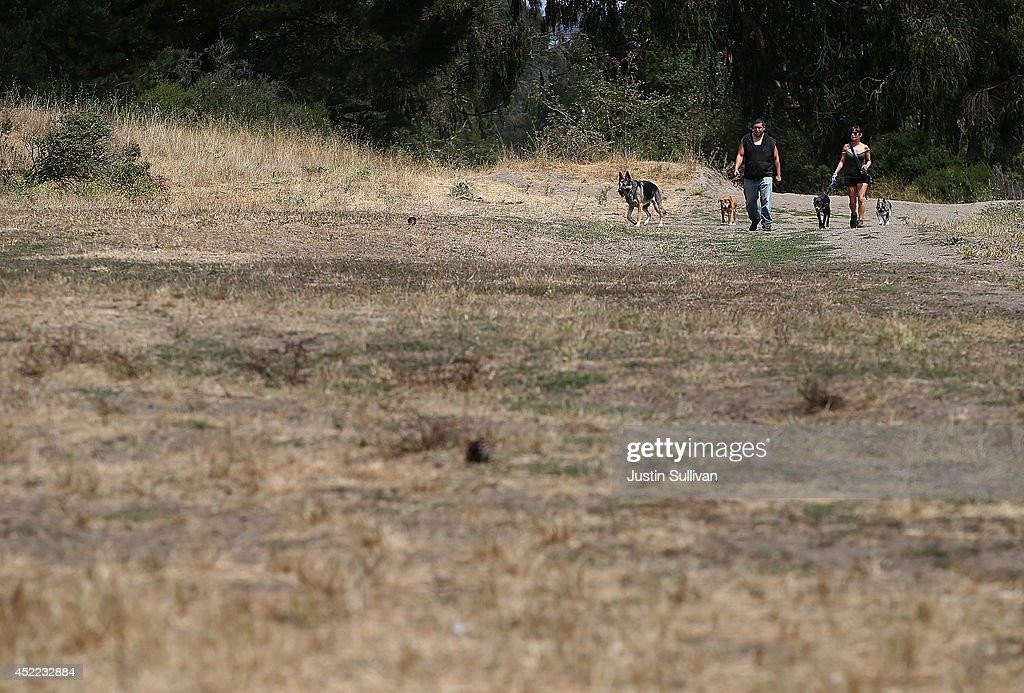 People walk their dogs across a field of dead grass at McLaren Park on July 16, 2014 in San Francisco, California. As the severe drought in California contiues to worsen, the State's landscape and many resident's lawns are turning brown due to lack of rain and the discontinuation of watering.