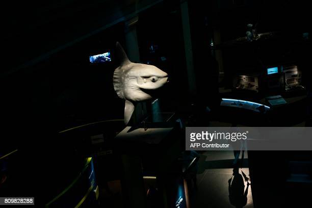 People walk through an exhibit on aquatic life at the Smithsonian's Natural History Museum on July 6 2017 in Washington DC / AFP PHOTO / Brendan...