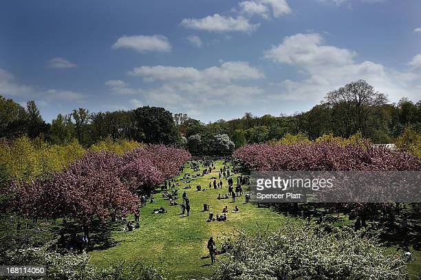 People walk through cherry blossom trees at the Brooklyn Botanic Garden on May 5 2013 in New York City The botanical garden which sits on 52acres...