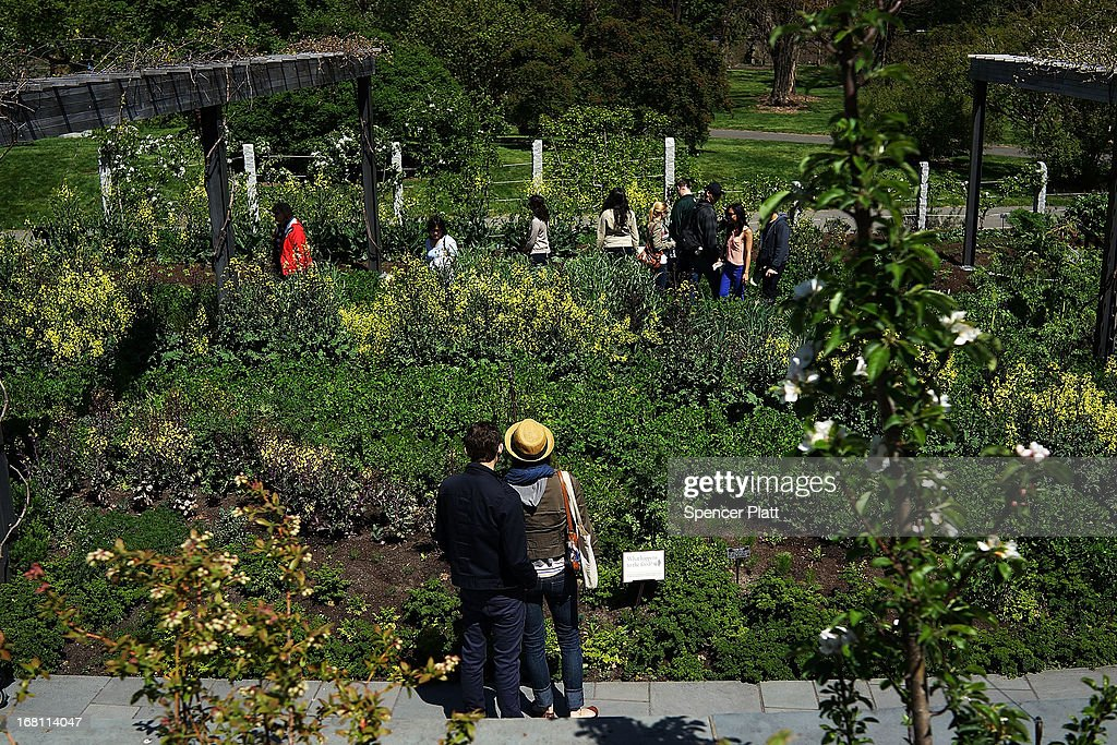People walk through the Brooklyn Botanical Garden on May 5, 2013 in New York City. The botanical garden, which sits on 52-acres, features numerous gardens and a conservatory. The Brooklyn Botanical Garden is famous for their cherry blossoms, which typically bloom at the end of April and are a centerpiece of the Garden's annual cherry blossom festival which attracts thousands of visitors.