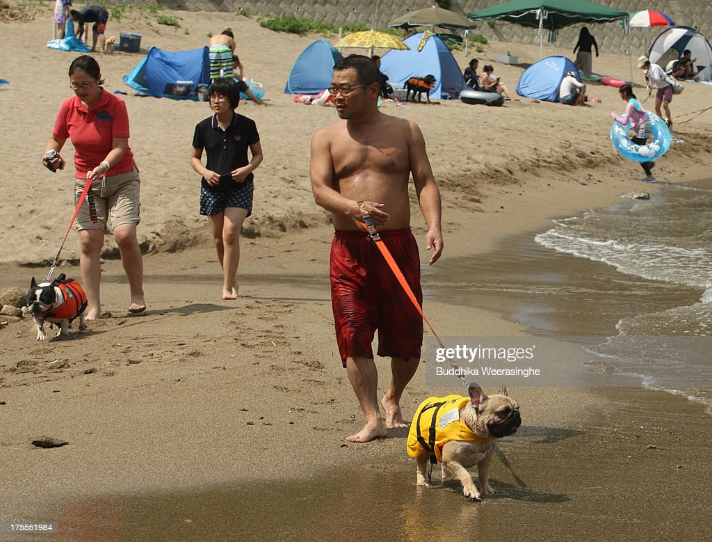 People walk with their pet dogs at Takeno Beach on August 4, 2013 in Toyooka, Japan. This beach is open for dogs and their owners every summer between the months of June and September. .