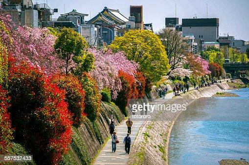 People walking along Kamo River in Spring