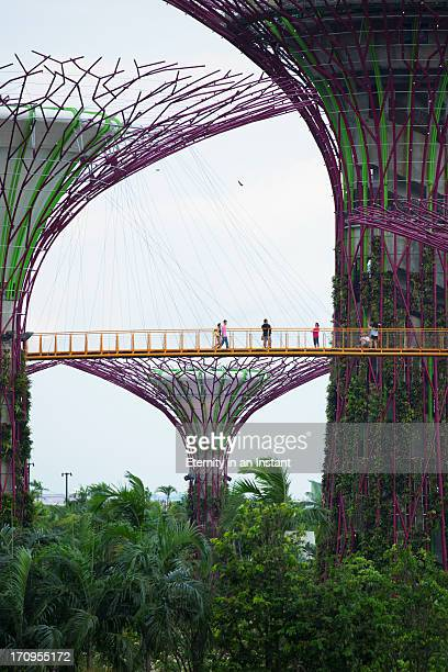 People walking by Supertrees in Gardens by the Bay