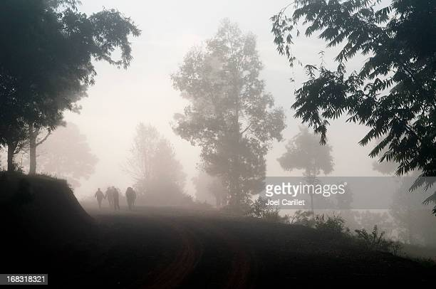 People walking in foggy forest in Myanmar