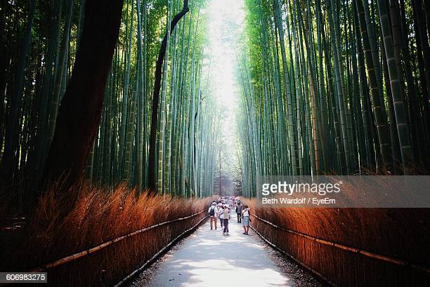 People Walking On Pathway Amidst Bamboo Trees