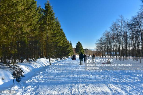People walking on snow along coniferous area