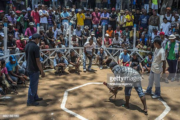 People watch a cockfight as gamecocks fight at a cockpit and their owners and the public make bets in Antananarivo Madagascar on December 06 2014...