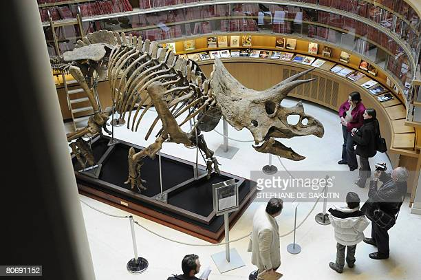 People watch a triceratops skull on April 16 2008 in Paris before his auction by Christie's house The 150object sales will offer 'a unique journey in...