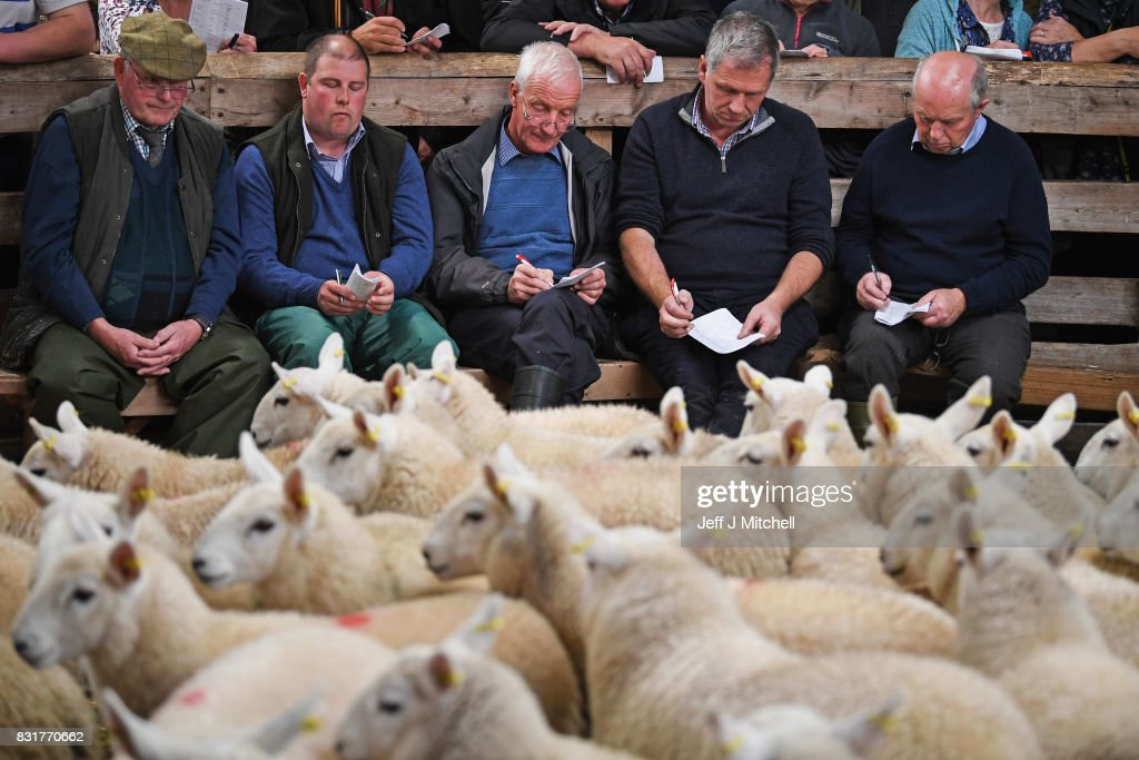 People watch as sheep farmers gather at Lairg auction for the great sale of lambs on August 15, 2017 in Lairg, Scotland. Lairg market hosts the annual lamb sale, which is the biggest one day livestock market in Europe, when some twenty thousand sheep from all over the north of Scotland are bought and sold.