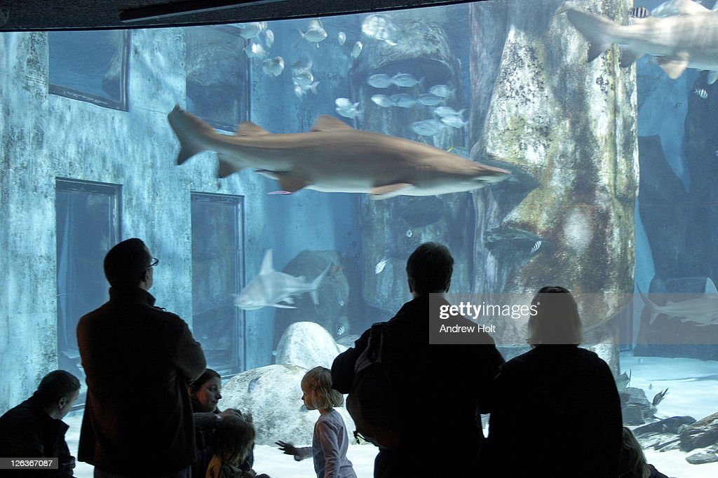 People watching sharks and other fish swimming in London Aquarium. More then 3,000 forms of marine life can be found swimming around under the former offices of the Grater London Council in County Hall, one of Europe's largest aquariums. : Stock Photo
