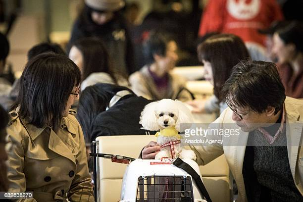 People with their dogs wait for flight at the airport in Chiba Japan on January 27 2017 Japan Airlines 'wan wan jet tour' allows owners and their...