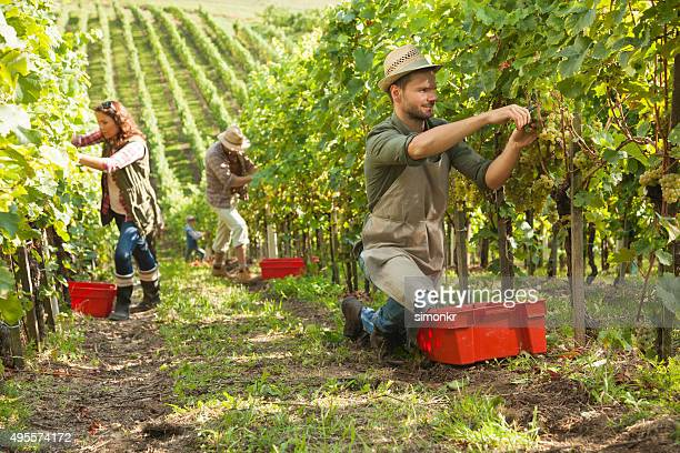 Personnes travaillant dans les vignobles