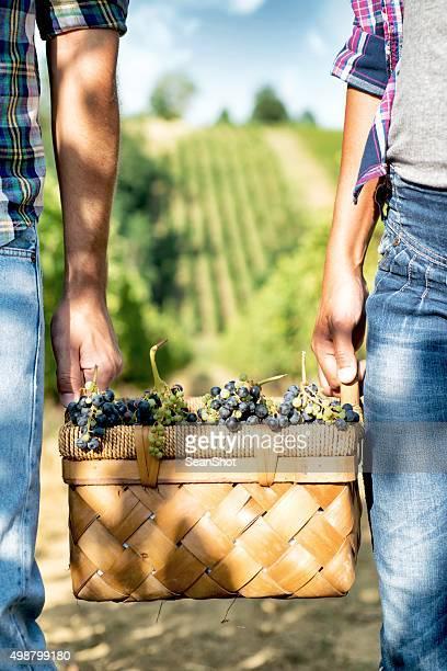 人々の仕事のブドウ園