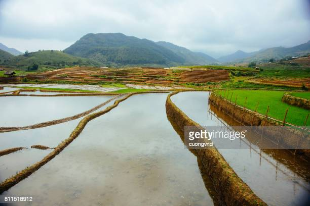People working on terraced rice fields at rain season in Lao Cai Vietnam. The terraced rice fields in most of the mountain areas in the North of Vietnam.