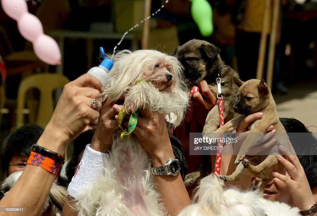 People's pet dogs are blessed with holy water by a Catholic priest (hand at L) at an event in Manila on March 17, 2013. A local government is offering free veterinary services and free vaccinations against rabies as the Department of Health designated March as Rabies Awareness Month as part of its national rabies prevention and control program, with the aid of eliminating the disease from the Philippines by 2020. AFP PHOTO / JAY DIRECTO