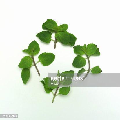 Peppermint : Stock Photo