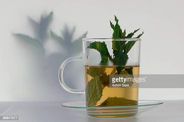 Peppermint tea with  fresh mint