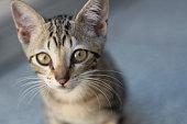 Foto dos primeiros meses de vida de um filhote de gato chamado Barão