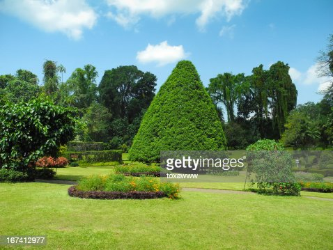 Peradeniya Botanical Garden landscape : Stock Photo