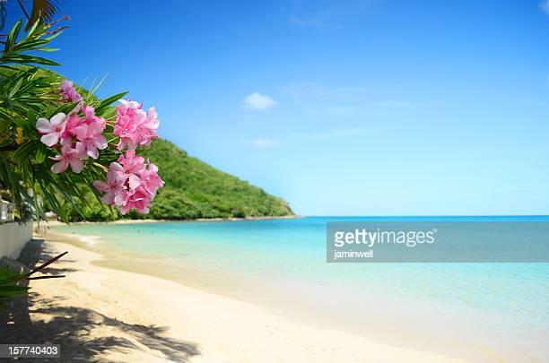 La plage parfaite