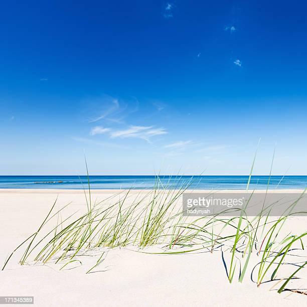 Perfekte Strand-sand dunes und das Meer