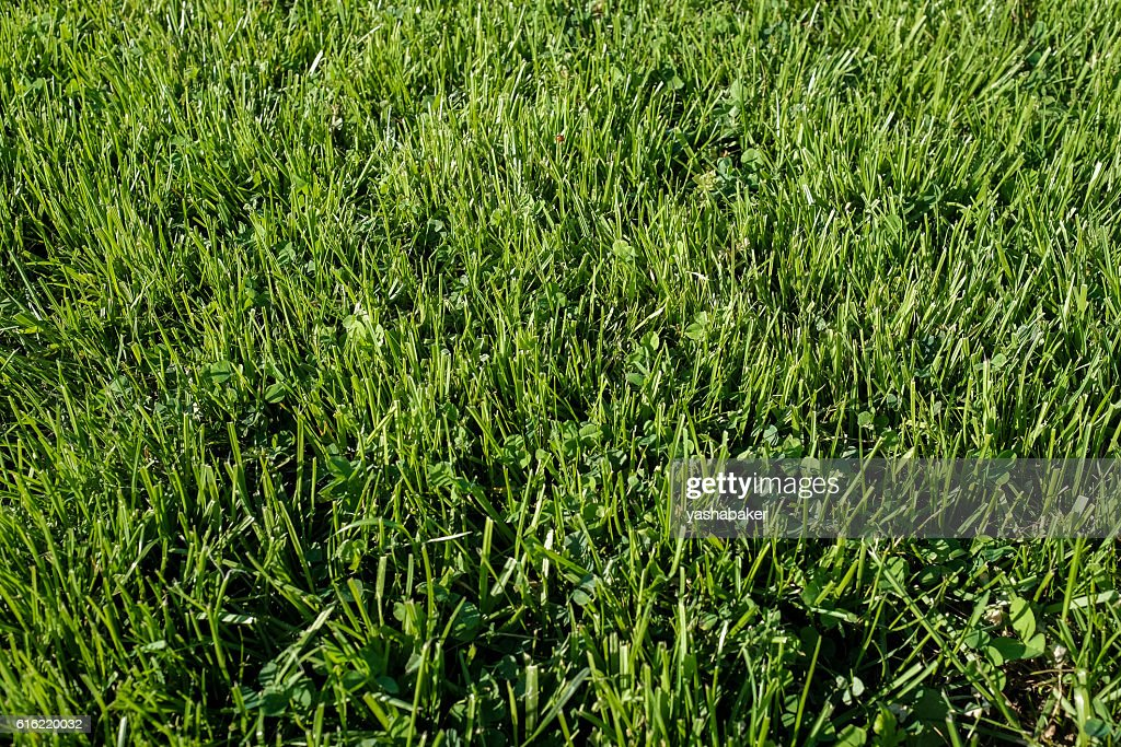 Perfect green grass lawn photo : Stock Photo