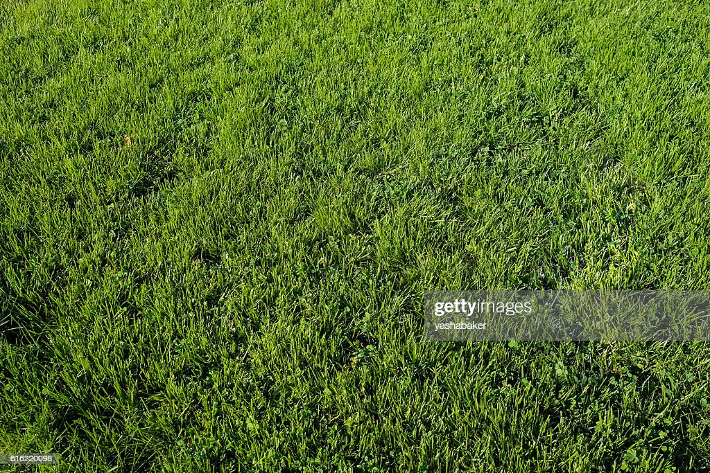 Perfect green grass lawn photo : Stockfoto