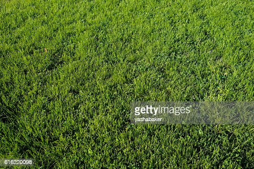 Perfect green grass lawn photo : Foto stock