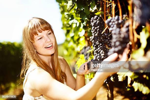 Perfekt! Lächelnde Frau Schecks ripeness schwarzen Trauben in vineyard