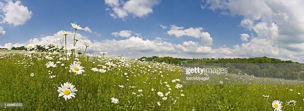 Parfait été meadow : Photo