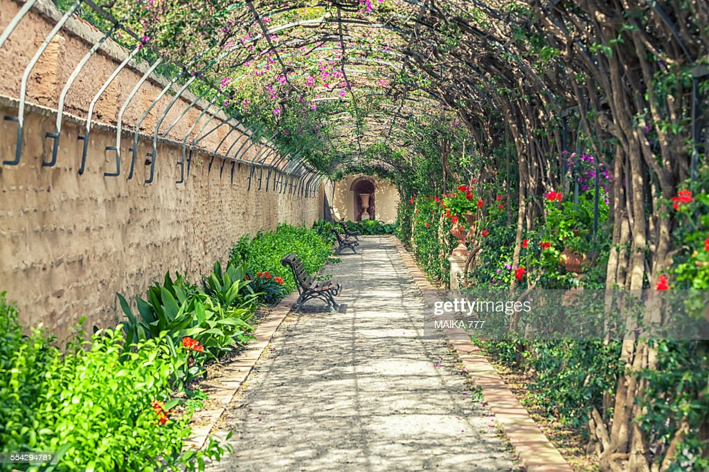 pergola of jardin de monforte valencia spain stock photo