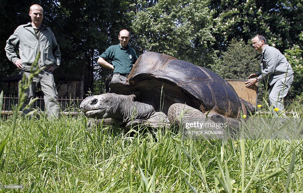 'Pericles' a giant turtle from the Seychelles, is brought to its summer exterior quarter by the Zoo's vets and employees on May 21, 2010. Pericles born in 1913 has been living at the Jardin des Plantes menagerie since 1923.