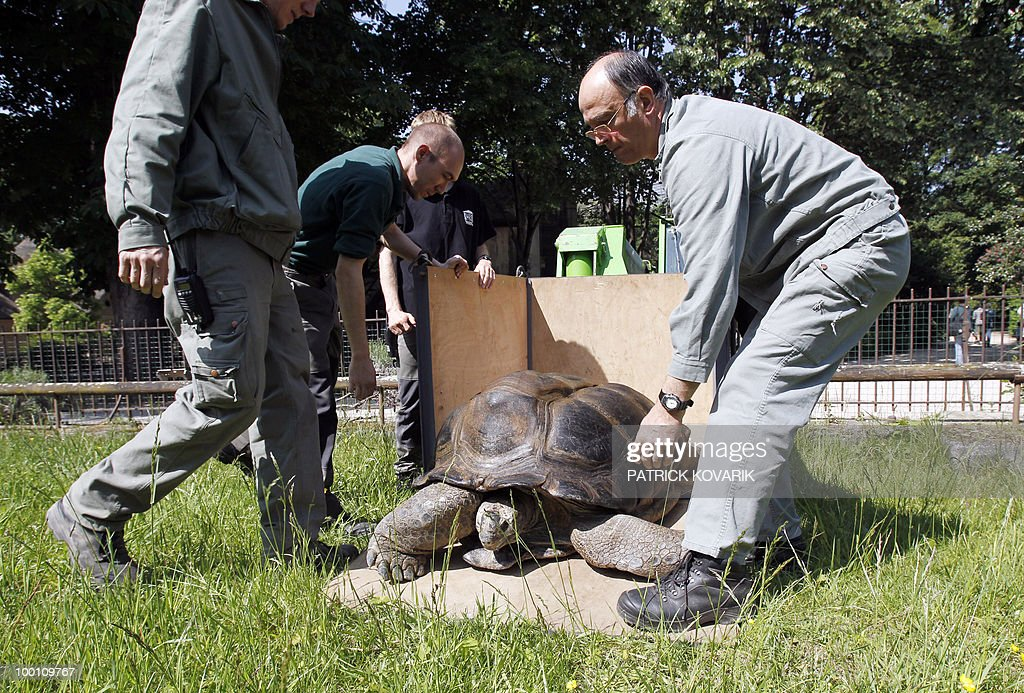 'Pericles' a giant turtle from the Seychelles, is brought to its summer exterior quarter at the Jardin des Plantes menagerie by vets and employees on May 21, 2010. Pericles, 145 kilos, born in 1913 has been living at the Zoo since 1923.