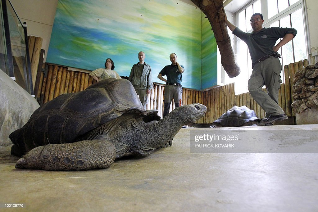 'Pericles' a giant turtle from the Seychelles, is seen prior being brought to its summer exterior quarter at the Jardin des Plantes menagerie by vets and employees on May 21, 2010. Pericles born in 1913 has been living at the Zoo since 1923.