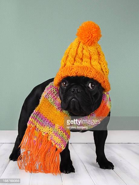 Perro con bufanda y gorro de lana