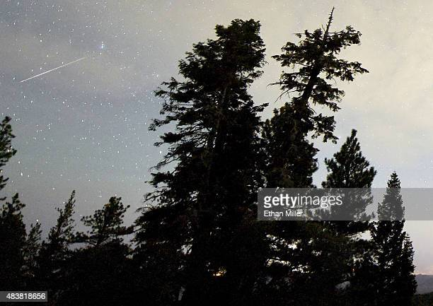 Perseid meteor streaks across the sky above desert pine trees on August 13 2015 in the Spring Mountains National Recreation Area Nevada The annual...